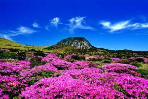 Paket Tour Wisata Liburan Asia Korea Jeju 6D Lebaran 2020 Murah - AmwindoTourCom - Honeymoon Island Jeju